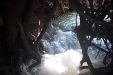 קפסולה של טבע מרענן- עמק המעיינות
